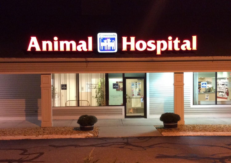 crossroads animal hospital veterinary services